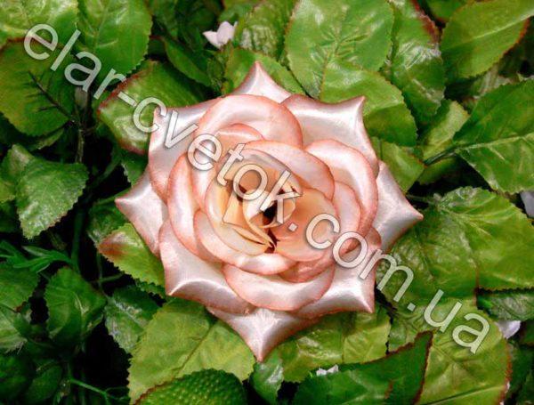 Роза средняя атлас