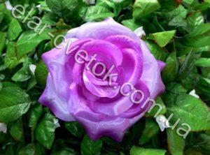 Роза большая атлас