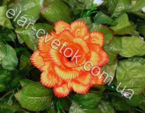 Роза павлин маленькая атлас