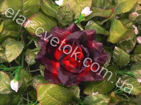 Роза острая атлас