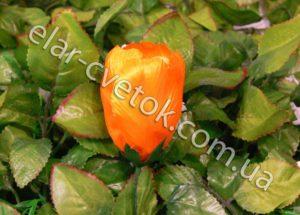 Тюльпан атлас