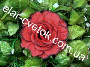 Роза утренняя простая