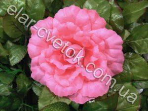 Роза капуста простая