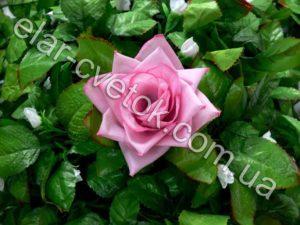 Роза углы простая