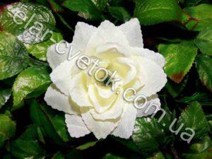 Роза острая простая
