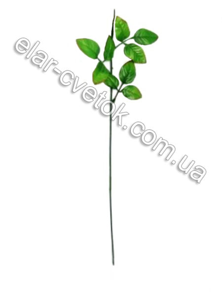 Нога розы с листом