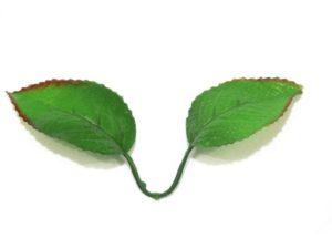 Лист розы двойной