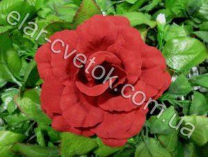 Роза капуста бархат