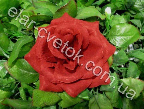 Роза большая бархат
