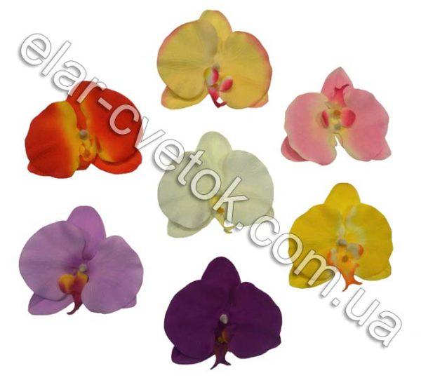 Орхидея бабочка