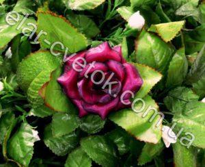 Роза очень маленькая атлас